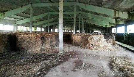 Продам ферму, Северский район